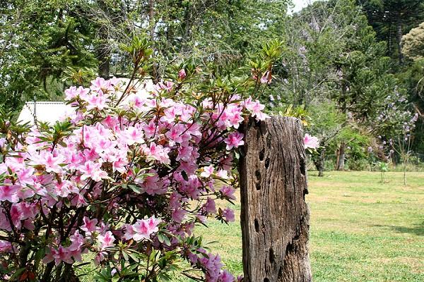 920_16442_primavera-campos-do-jordao-8_161.jpg