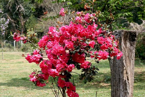 920_16460_primavera-campos-do-jordao-12_161.jpg