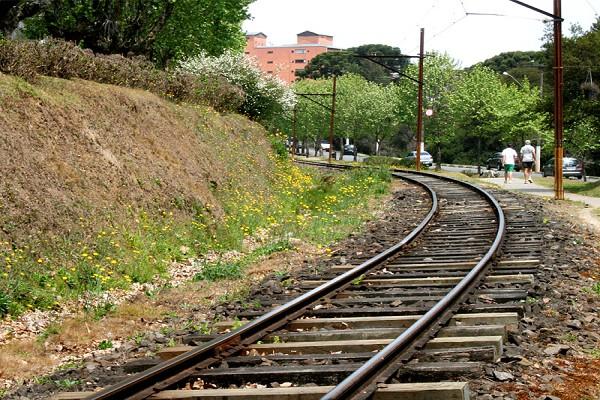920_164736_primavera-campos-do-jordao-14_161.jpg