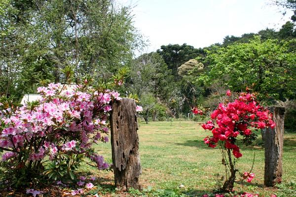 920_164759_primavera-campos-do-jordao-15_161.jpg